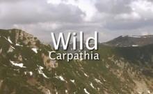 wild_carpathiageneric-captura film britanic dsp Romania