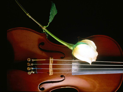 Vioara si trandafir-400px