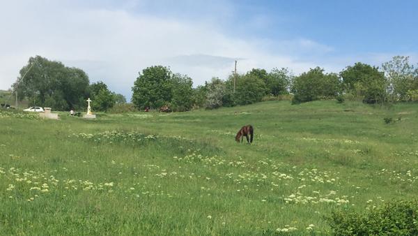 13-Ghiduleni-Troita-Panorama spre Troita si un cal din cei trei-600px-IMG_2771
