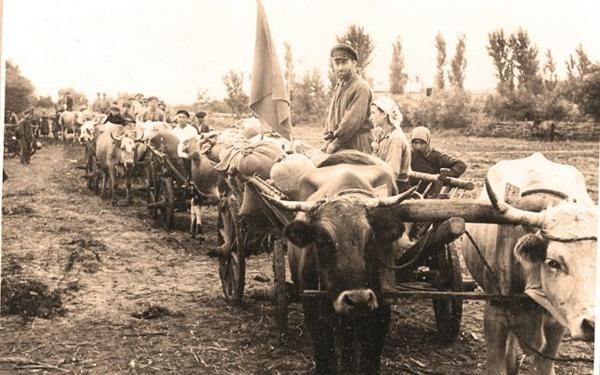 Foametea din Basarabia 1946-1947-jaful de paine-caravana rosie-600px